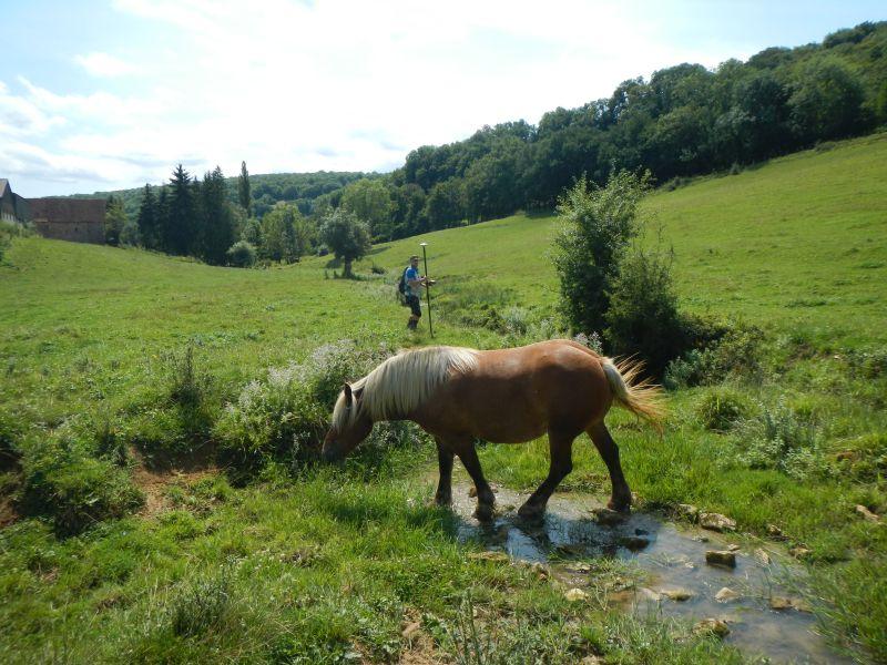 Un cheval au milieu de la rivière Arvo