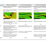 Dans le cadre de l'étude de modélisation hydraulique de la Chalaronne, tableau comparatif des mesures compensatoires
