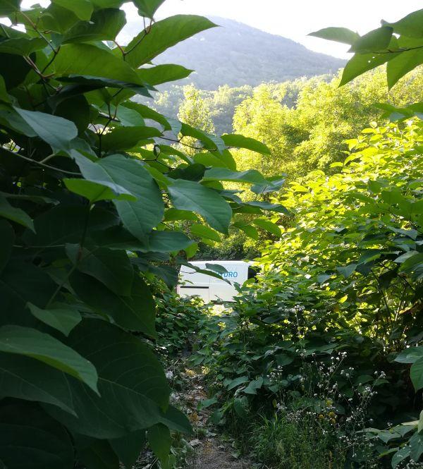 Le camion Dynamique Hydro caché derrière la végétation florissante en ce début d'été.
