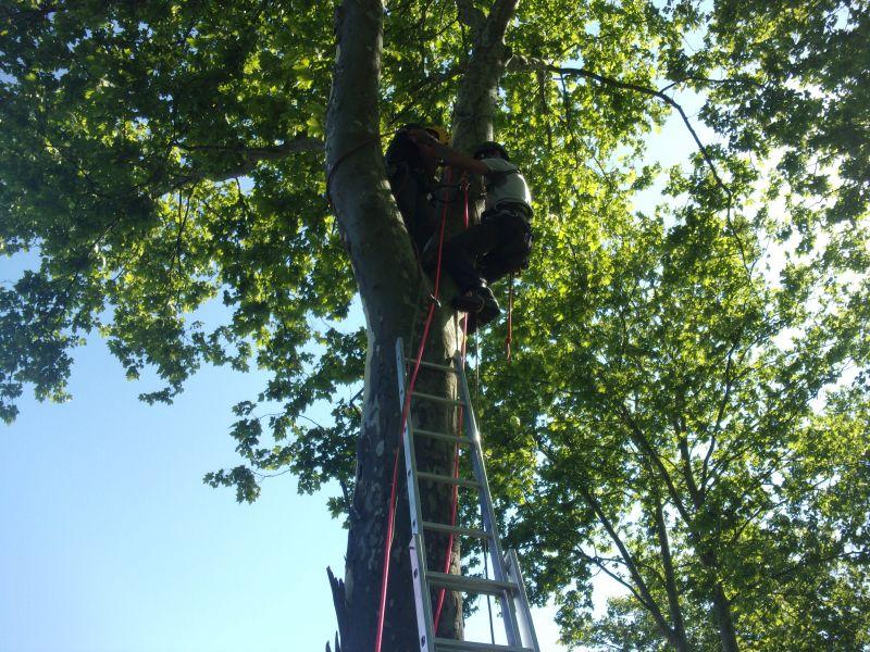 Installation de caméras dans un arbre ou sur un poteau par nos partenaires spécialisés dans le travail en hauteur pour le suivi chronophotographique des bancs de l'Isère
