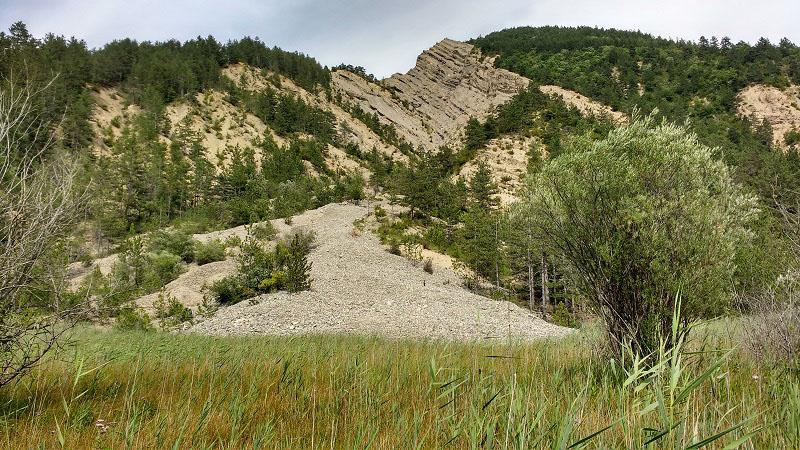 Vue sur le marais des Bouligons dans la Drôme. Roseaux, un arbre et une montagne en arrière plan.