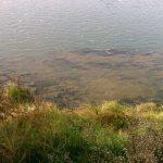GARONNE - Diagnostic sédimentaire : vue sur un détail sédimentaire du fleuve